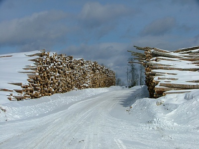 Log Yard in Winter