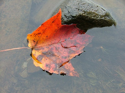 Picture of leaf floating in a puddle